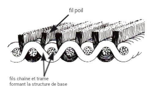 Structure du velours