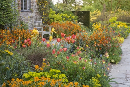 Tulips, wallflowers and euphorbia in the Cottage Garden at Sissinghurst Castle Garden, Kent.
