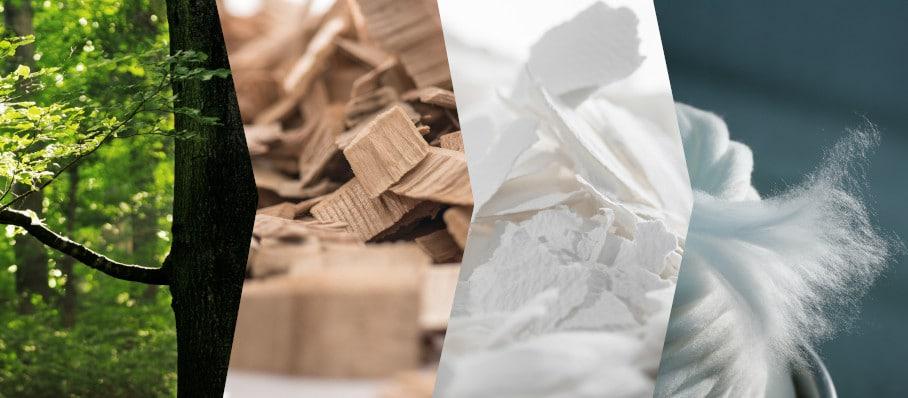 Fabrication du Tencel : de la forêt à la fibre